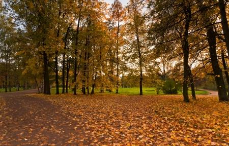Autumn park avec des feuilles d'or et rouge et la lumi�re du soleil � travers les arbres Banque d'images