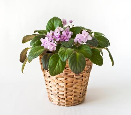 Cache Pot Images & Stock Pictures. Royalty Free Cache Pot Photos ...