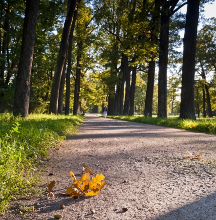 Autumn alley with woman silhouette beyond and oak branchlet foreground photo