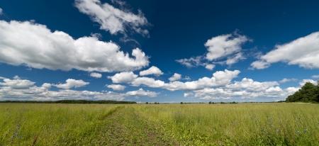 earth road: Panorama campo di erba verde con la terra su strada e Cloudscape