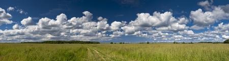 earth road: Campo panorama di erba verde con via terra e Cloudscape