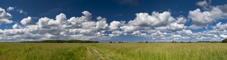 vastness: Field panorama of green grass with earth road and cloudscape