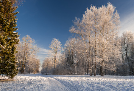 frozen trees: Snow-covered path to winter forest with frozen trees around and ski-track