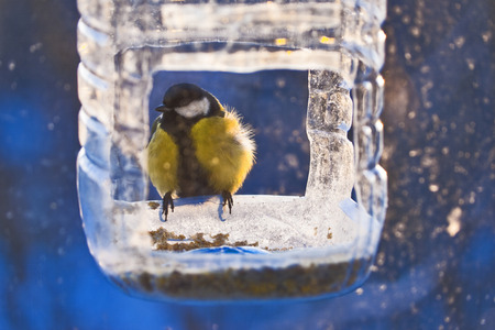 breach: Titmouse at the edge of  homemade rack breach in cold and frost winter day