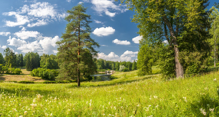 pinetree: Summer park panorama with pinetree and classical bridge over river