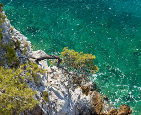 Curved pine-tree growing out of rock over clear emerald-green Aegean Sea water