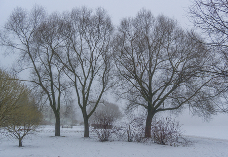 Winter mist in the park with trees and bushes next to the river, monocle lens Stock Photo