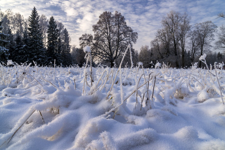 Snow covered field with hoar frosted grass and trees in cold winter day