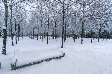 Snow covered park with lines of trees and bench in front