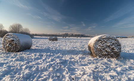 Snow covered field with rolls of hay and hoar frosted trees in cold winter day Stock Photo