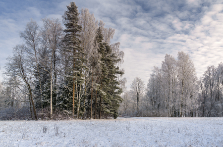 Snow covered park with hoar frosted trees, path and picturesque cloudy sky