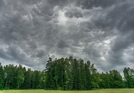 Thunder in the forest, dark clouds of bizarre forms over green trees