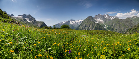 Panorama of alpine meadow with flowers in Klych highland pass near border of Georgia - Abkhazia
