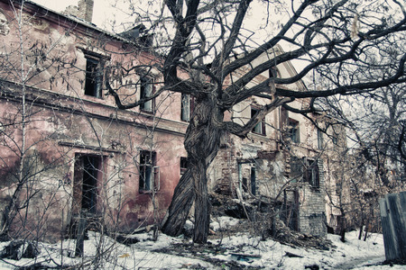 intertwined: Intertwined old trees on the background of an abandoned dilapidated old mansion