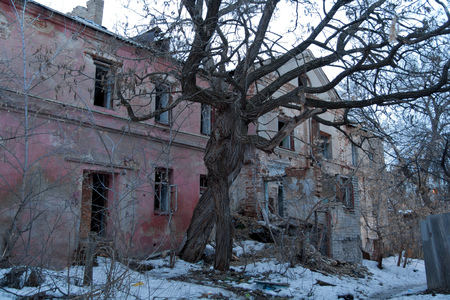 intertwined: Intertwined old trees on the background of an abandoned dilapidated old mansion of Gardenin, Voronezh, Russia