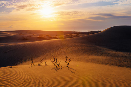 Dawn in the dune desert in Kazakhstan