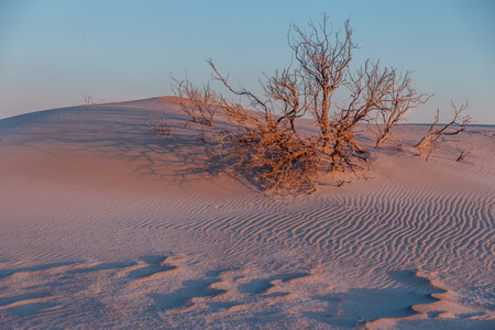 Colorful evening in the desert. Landscape with dunes and dwarf trees illuminated by evening sunlight Stock Photo