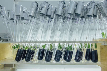 Microplants in test tube in vitro