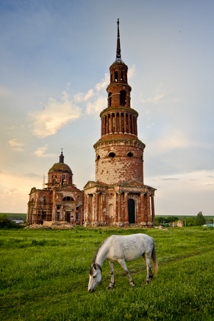 White horse on the green meadow on background of beautiful abandoned church with high bell tower at the evening