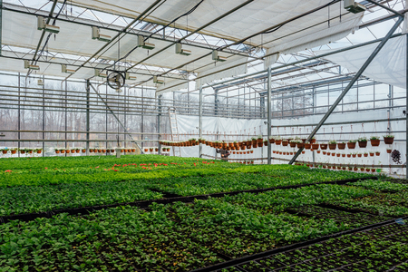 Modern hydroponic greenhouse with climate control system for cultivation of flowers and ornamental plants for gardening.
