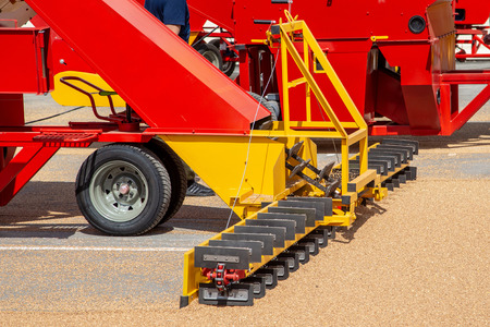 Grabbing grain from asphalt surface by scrapers of conveyor grain loader. Stock Photo