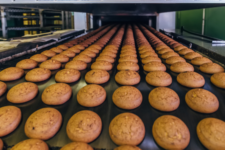 Production line of baking oat cookies. Biscuits on conveyor belt, close up