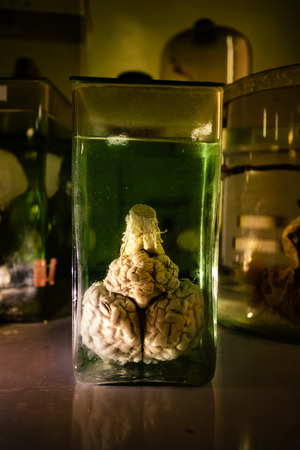 Animal brain in glass jar with formaldehyde in dark and creepy laboratory.