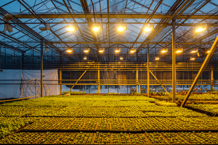 Modern hydroponic greenhouse with complex climate control system for cultivation of agricultural and ornamental plants. Working artificial light in evening. Stock Photo