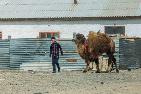 Aralsk, Kazakhstan - April 24, 2017: Kazakh country boy with camel