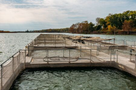 Cages for sturgeon fish farming in natural river or pond.