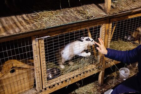 Human hand touches white rabbit in a cage.