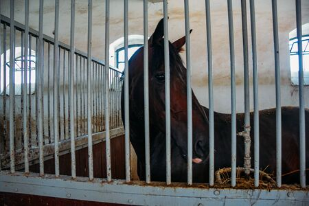 Chestnut horse in a stable behind bars, close up,