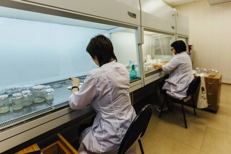 Scientists works in a laminar box. Preparation of micro plants for cloning in vitro. 版權商用圖片