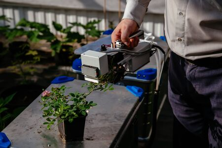 Scientist measuring plant photosynthesis young rose by using carbon dioxide measuring device