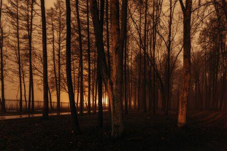 Dark and spooky foggy park at night.
