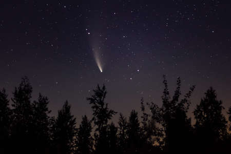 Neowise comet C / 2020 F3 above night forest.