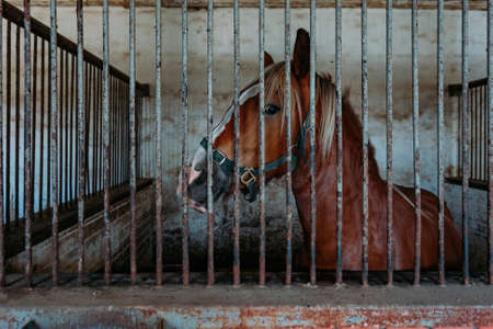 Horse in the stable behind bars, close up.