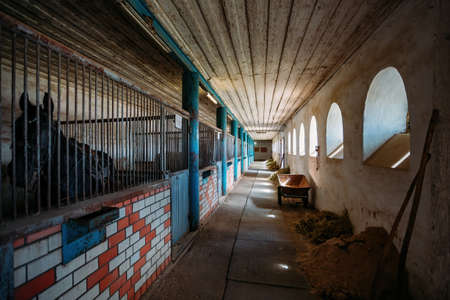 Old historical horse stable with loose horse boxes, tunnel view. Archivio Fotografico