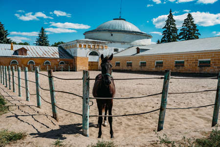 Young thoroughbred horse at the farm corral. Archivio Fotografico