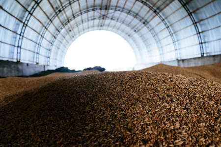 Wheat grain storage in the arched hangar.
