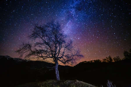 Night sky with milky Way and alone tree on mountain landscape.