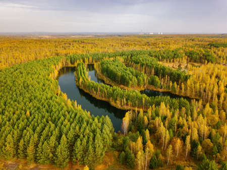 Aerial view of beautiful natural landscape. Lake in pine forest 版權商用圖片