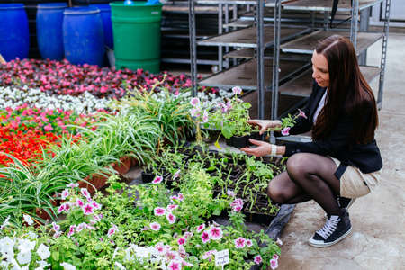 Attractive young woman is choosing flowers in pot in greenhouse.