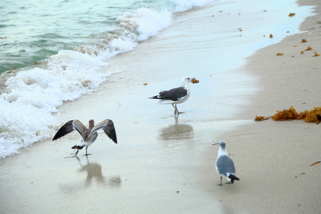 Gulls on Miami South Beach