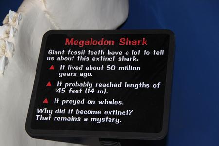 Megalodon shark jaws description close up. Museum. Tourism. Exhibition. Los Angeles, SEAWORLD