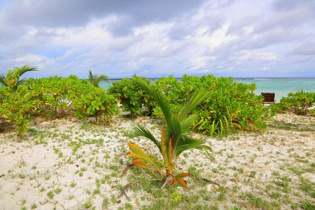 Gorgeous view of white sand beach. Young woman with green leaves on white background. Maldives, Indian Ocean.