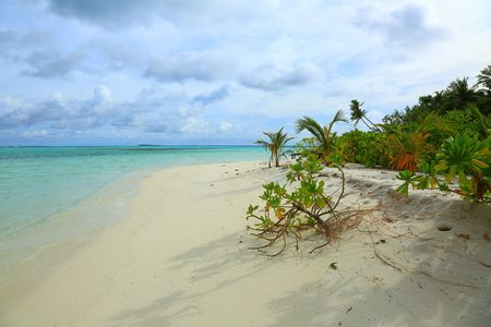 Turquoise water, white sand beach and green trees on blue sky background.