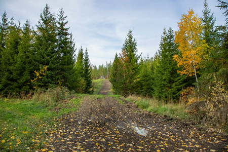 Beautiful autumn country landscape view. Gorgeous nature backgrounds. Green yellow trees and off-road.