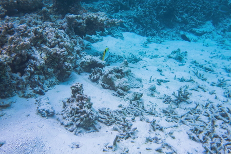 Gorgeous underwater view on corall. Snorkeling in Indian Ocean, Maldives.