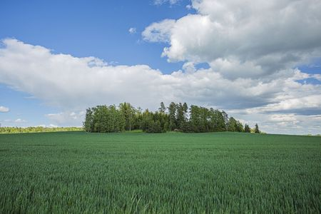 Gorgeous view of green field with rye. Beautiful green backgrounds. Sweden, Europe.